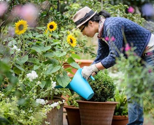 watering-garden-1200x675